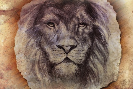 undomesticated: lion face drawing  on vintage paper collage, abstract background. eye contact.