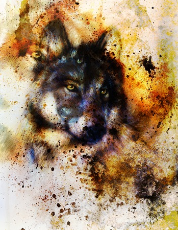 Wolf painting, color background, multicolor illustration and spots