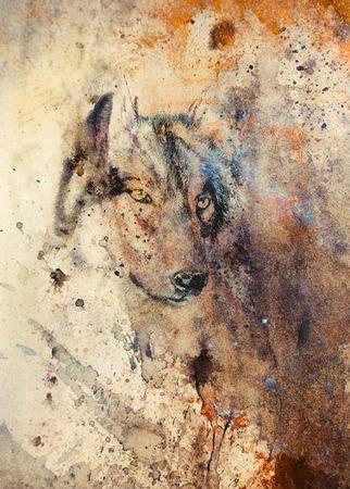 늑대 회화, 배경에 색 추상 효과. 스톡 콘텐츠