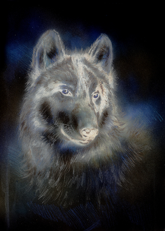 wolf couple: Wolf painting, color abstract effect on background. Stock Photo