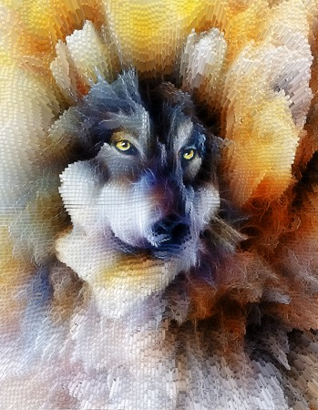 Wolf, color abstract background, multicolor illustration and fractal effect.