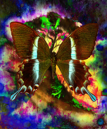 extreme terrain: Painting butterfly and tree, wallpaper landscape, color collage. and abstract grunge background with spots, blue, black, yellow, green and violet color.
