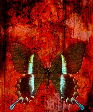 crackle: illustration of a butterfly, mixed medium, abstract color background and color desert crackle  effect, Red, orange, black color.
