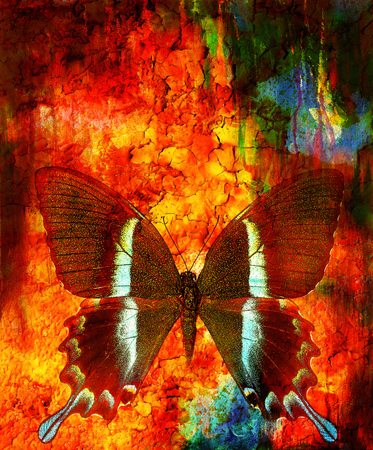 crackle: illustration of a butterfly, mixed medium, abstract color background and color desert crackle  effect, Red, orange, black color Stock Photo