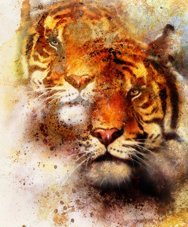 marvel: tiger collage on color abstract background and mandala with ornament, painting wildlife animals and sports. Brown, orange, black and white color
