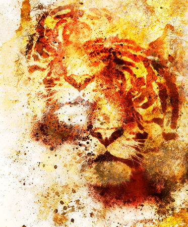 marvel: tiger collage on color abstract background and mandala with ornament, painting wildlife animals and sports