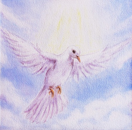 pidgeon: Dove portrait in clouds, white radiant holy flying peace symbol, colorful painting