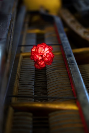 red  carnation: Antique grand piano mechanics detail with a red carnation flower.