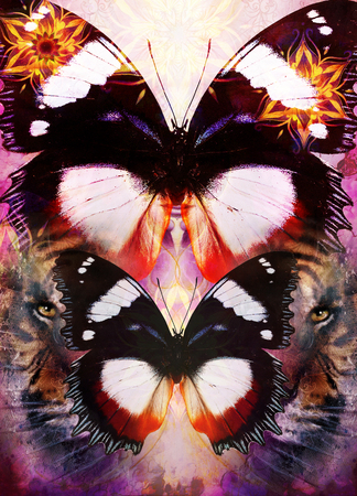 marvel: Tiger and butterfly with ornamental mandala on an abstract background, with spot structures