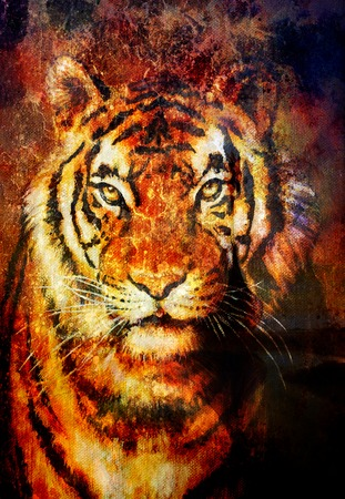 royal safari: tiger collage on color abstract  background,  rust structure, wildlife animals, computer collage Stock Photo