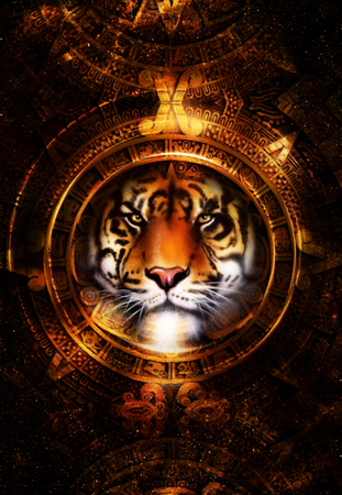 mayan culture: Ancient Mayan Calendar and Tiger head, abstract color Background, computer collage, Eye contact