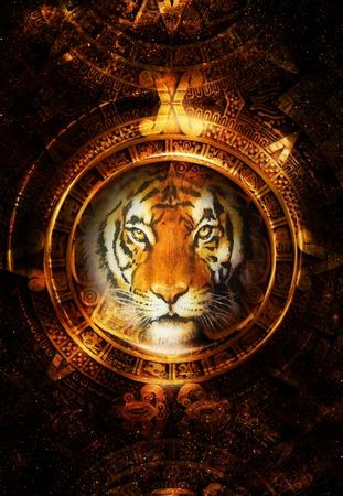 mayan calendar: Ancient Mayan Calendar and Tiger head, abstract color Background, computer collage, Eye contact
