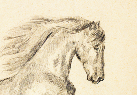 Draw pencil horse on old paper, original hand draw