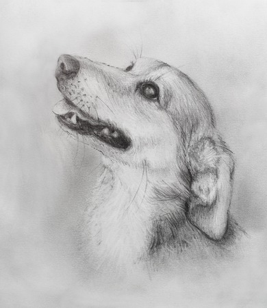Dog pencil drawing on old paper, vintage paper. Dog portrait Stock Photo