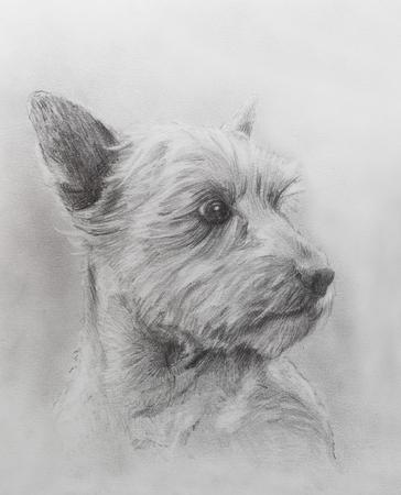 elegantly: Dog pencil drawing on old paper, vintage paper. Dog portrait Stock Photo