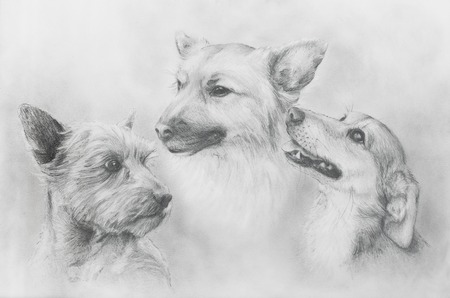 Dogs pencil drawing on old paper, Dogs portrait. Dog portrait