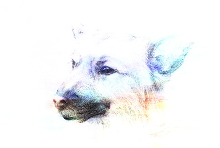 elegantly: Dog pencil drawing on old paper, vintage paper and old structure with color spots