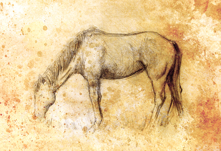 old horse: Draw pencil horse on old paper, vintage paper and old structure with color spots Stock Photo