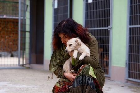honden in het asiel en vrouw. Dierenasiel Stockfoto