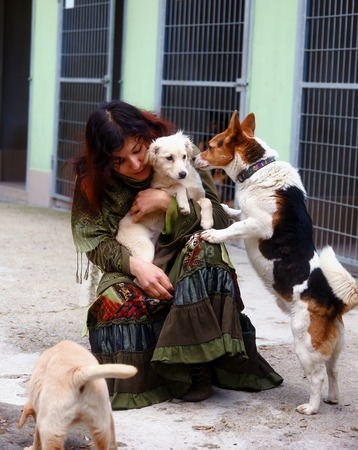 dogs in dog shelter and woman. Animal shelter
