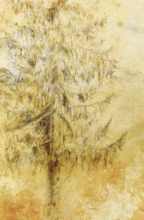 tirol: pencil drawing spruce on old paper background Stock Photo