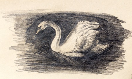pencil drawing swan on old paper background Stock Photo