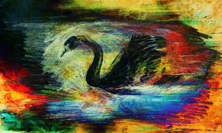 pond life: pencil drawing swan on old paper background and Color Abstract background Stock Photo