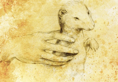 according: drawing according Leonaqrdo daVinci , detail with hand touching stoat Stock Photo