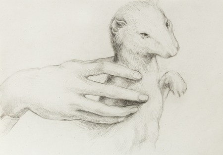 the detail: drawing according Leonaqrdo daVinci , detail with hand touching stoat Stock Photo