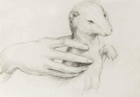 leonardo davinci: drawing according Leonaqrdo daVinci , detail with hand touching stoat Stock Photo