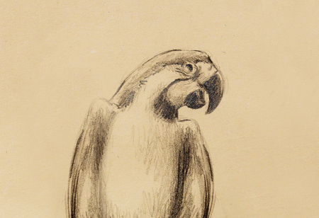 white fly: pencil drawing parrot on old paper, vintage paper