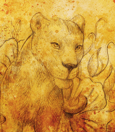 lioness: Lioness with flower, pencil drawing. Color effect and Computer collage
