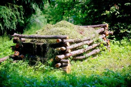 garden waste: beautiful natural compost heap in woodland permaculture garden
