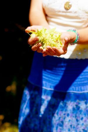 linden tree: girls hands with handful of healing linden tree flowers