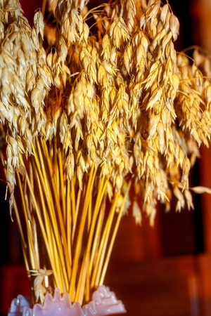 dryed: still life with decorative dryed oat in beautiful sunlight Stock Photo