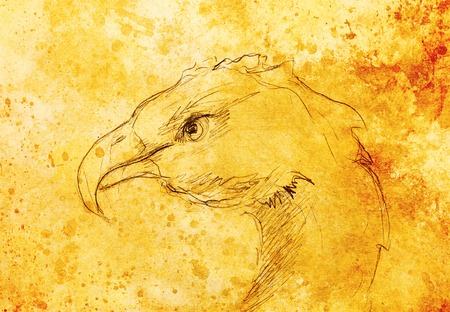 phenix: drawing of Bird. computer collage and color structure