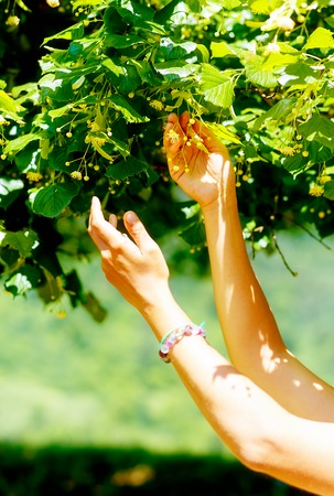 gentle prayer to a beautiful linden tree on bright midsummer day Stock Photo