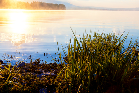 dawning: detail of grass halm at a lake in magical morning time with dawning sun