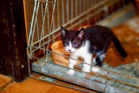 pussycat: adorable cute little black and white pussycat in a cage