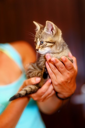 pussycat: adorable sweet little pussycat in hands of young girl Stock Photo