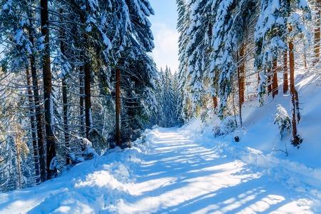 Hermoso paisaje de montaña cubierto de nieve y árboles cubiertos de nieve. Hermoso día soleado en las montañas
