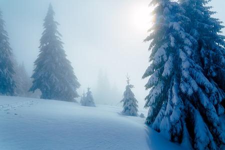 Hermoso paisaje de montaña cubierto de nieve y árboles cubiertos de nieve
