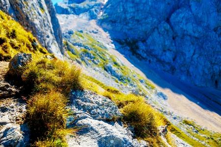 deatil: detail of mountain landscape vegetation on summer day