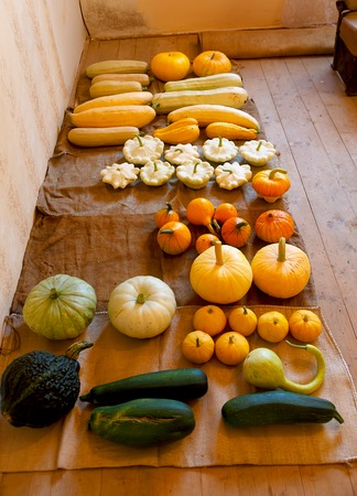 sorts: bountiful autumn harvest of many pumpkin sorts and colours
