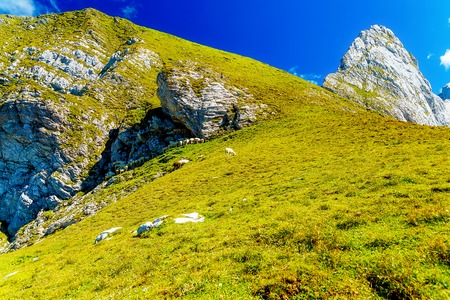 Mountain alpine pastures in the Slovenian. Flocks of sheep in the mountains Stock Photo