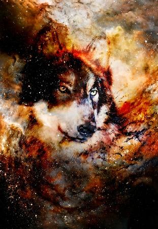lupo magico, collage grafico multicolore del computer
