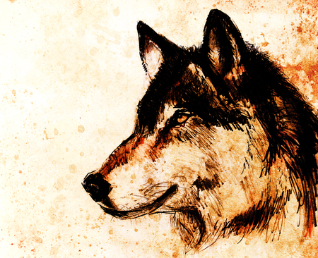 Drawing wolf on old paper, original hand draw. Color effect.