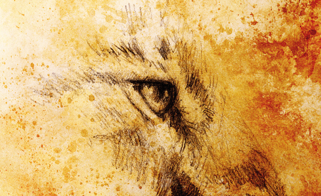 lion eye. animal drawing on vintage paper. Color effect.