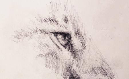 lion eye. animal drawing on vintage paper.