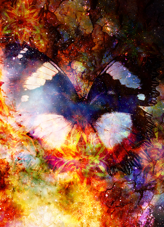Filigrane floral ornament and Butterfly. cosmic backgrond, computer collage.